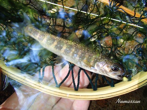 8月のイワナ釣り_PART 1  森の中の川